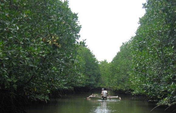 Talibon mangroves